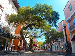 The Pretty tree lined street of Espagnola Way - home ot artists, poets, crooks and gangsters.